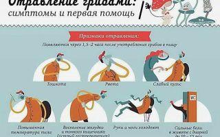 Можно ли есть мухоморы: что будет при отравлении несъедобными видами гриба, какие симптомы указывают на интоксаикацию