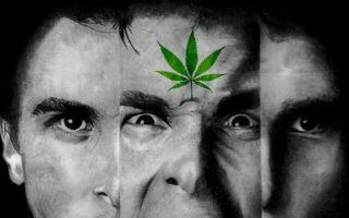 Курение травы — последствия употребления марихуаны и можно ли умереть от передозировки каннабисом