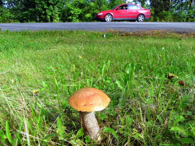 Можно ли отравиться солеными грибами: симптомы отравления груздями, последствия и восстановление организма