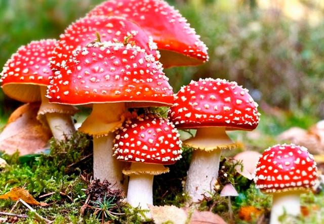 Признаки отравления грибами, через сколько появляются первые симптомы и что следует делать в такой ситуации