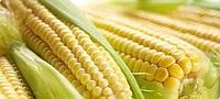 Отравление фасолью (причины и симптомы), можно ли есть сырую фасоль и каковы последствия интоксикации