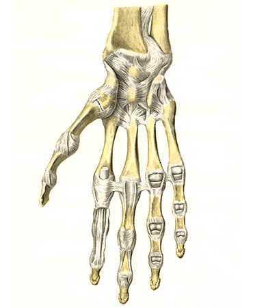 Разрыв связок лучезапястного сустава — лечение, последствия и симптомы патологии связочного аппарата кисти руки