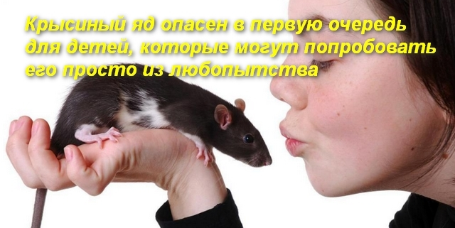 Симптомы отравления крысиным ядом у человека, смертельная доза вещества и методы оказания первой помощи