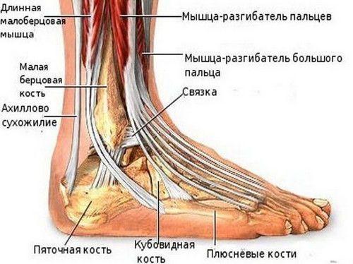 Растяжение лодыжки — лечение в домашних условиях и симптомы, что делать если потянул связку на лодыжке