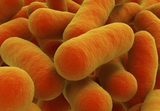 Убивается ли ботулизм при кипячении — при какой температуре погибают бактерии и споры ботулизма