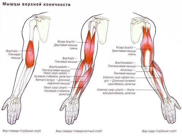 Как укрепить плечевой сустав — упражнения для восстановления и укрепления плечевого сустава