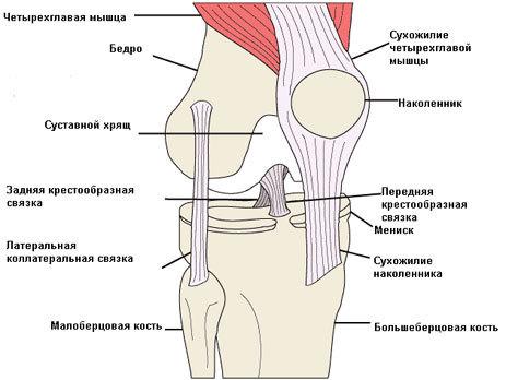 Как растянуть подколенные связки и упражнения для растяжки сухожилия коленного сустава, болит колено после растяжений