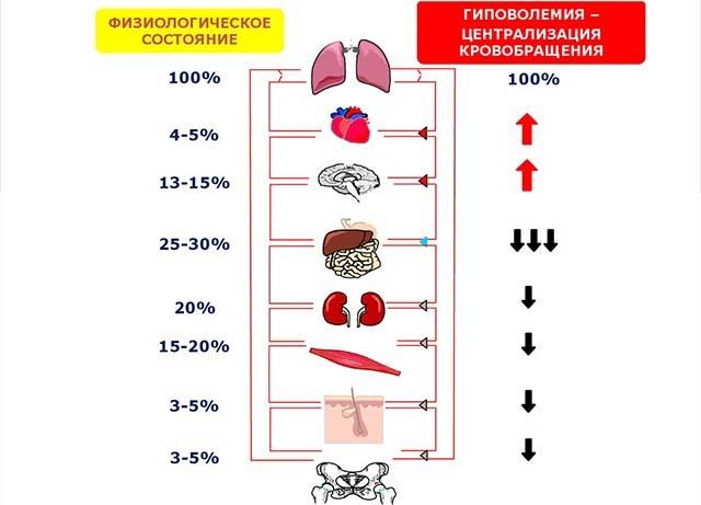 Техника наложения венозных жгутов при отеке легких: алгоритм действий, осложнения при отсутствии помощи