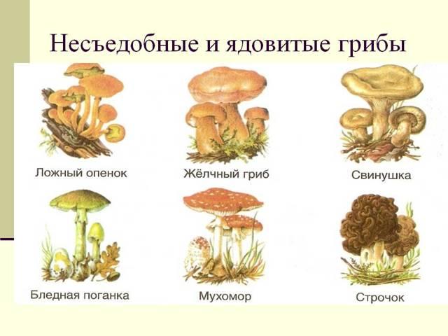 Отравление маринованными грибами – симптомы и возможные последствия, срок годности консервированных грибов