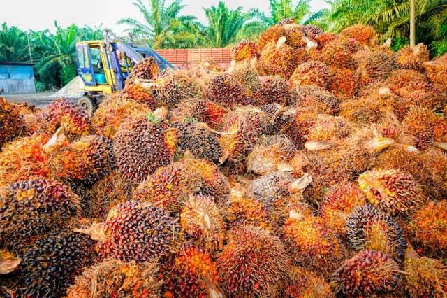Чем опасно пальмовое масло для организма — вред и польза продукта для здоровья человека