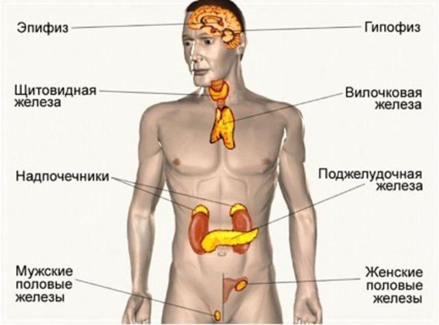 Послеоперационные швы: заживление, чем обрабатывать рану после операции, заживляющие мази и средства