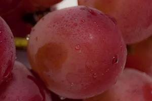 Отравление виноградом – симптомы и может ли быть понос и боли в желудке