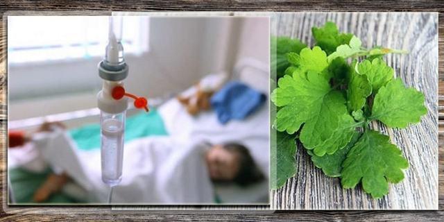 Отравление чистотелом: симптомы передозировки соком ядовитого растения и что делать если чистотел попал в глаз