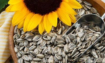 Отравление семечками подсолнуха, льна и тыквы: симптомы, как оказать первую помощь и избежать последствий интоксикации