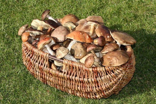 Признаки отравления грибами через сколько они наступают