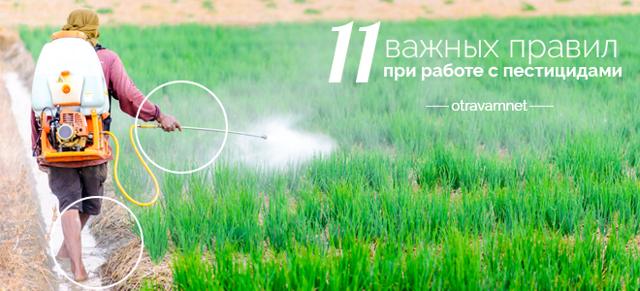 Отравление пестицидами: симптомы и последствия, первая помощь и профилактика отравлений ядохимикатами