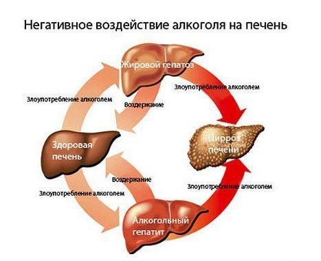 Влияние алкоголя на организм человека и последствия употребления спиртных напитков