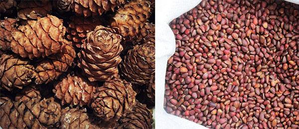 Отравление орехами (грецкими, кедровыми и другими): симптомы интоксикации и что делать если переел орешков