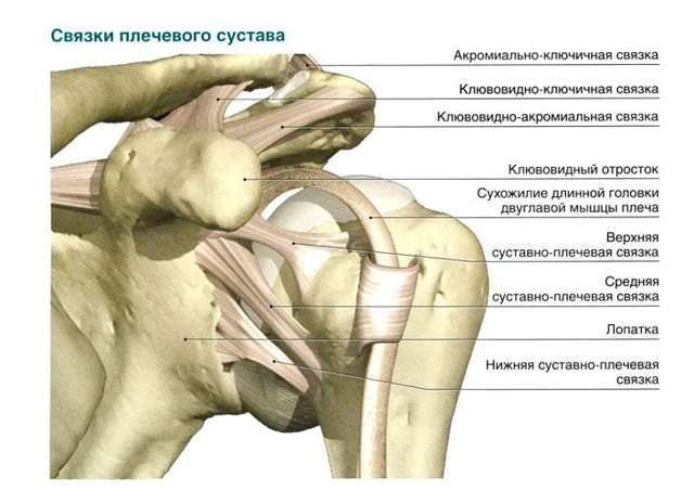 Разрыв связок плечевого сустава — лечение и сколько заживает, симптомы надрыва и порванных связок плеча