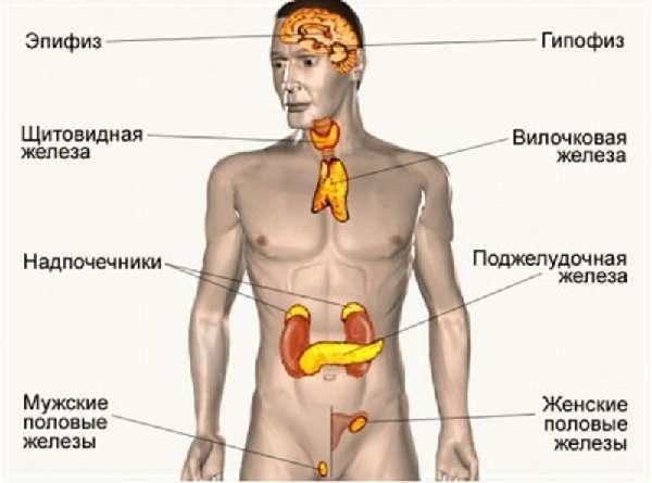 Мазь для заживления швов после операции: ранозаживляющие препараты для лечения послеоперационных швов