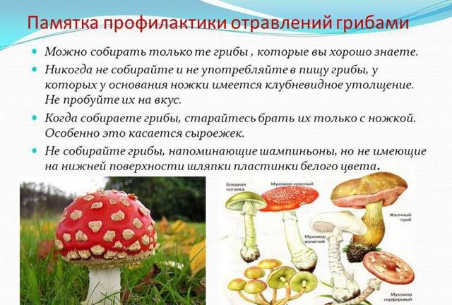 Что делать при отравлении грибами (первая помощь): через сколько проявляется отравление и каковы последствия отравления