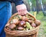 Отравление грибами – симптомы и признаки: через сколько наступают, первая помощь и профилактика отравлений грибами